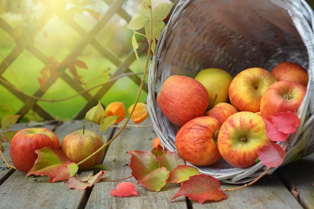 Τα μήλα μάς προστατεύουν από πέντε μορφές καρκίνου