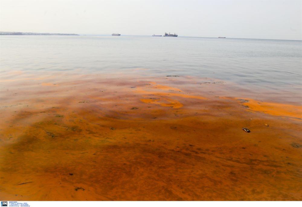 «Οικολογία- Πράσινη λύση»: Η ερυθρά παλίρροια πιστή στο ανοιξιάτικο ραντεβού της