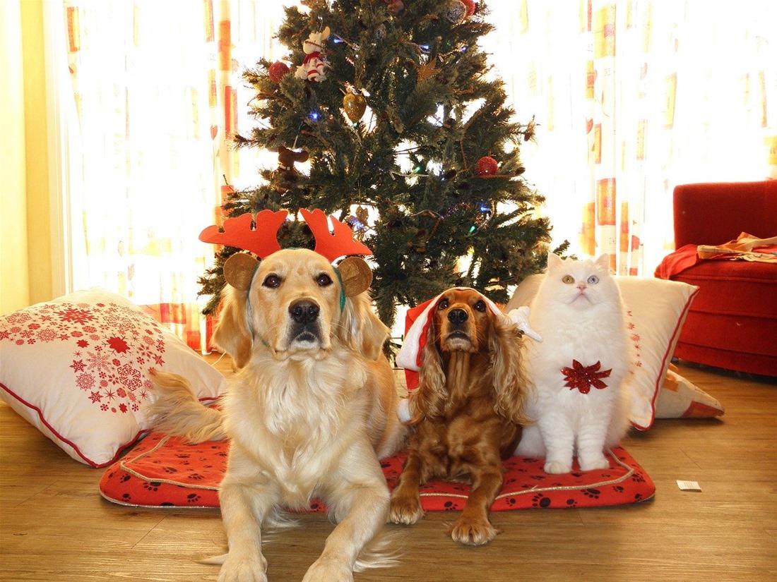 Συμβουλές για ασφαλή Χριστούγεννα με το κατοικίδιό σας