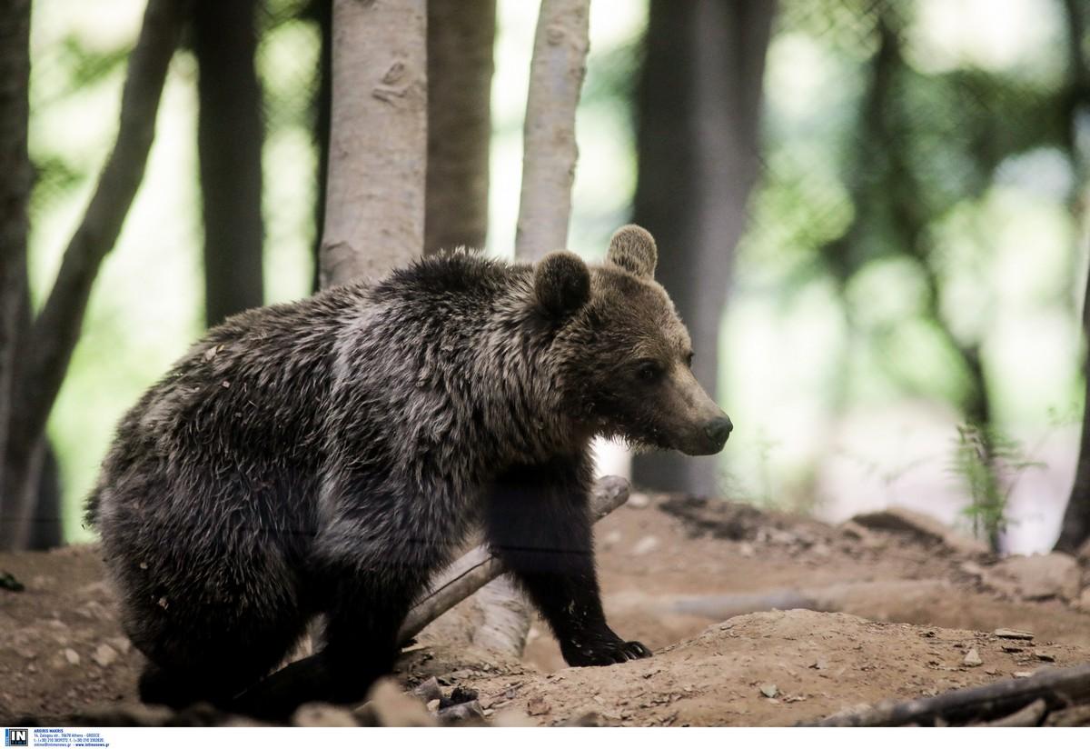 Τροχαίο στην Εγνατία – Θύμα μια αρκούδα