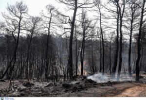Σύλληψη αγρότη για την φωτιά στα Στύρα Εύβοιας (Video)