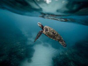 Σεμινάριο για την προστασία θαλάσσιων χελώνων, καρχαρίων και βάτων στην Μηχανιώνα
