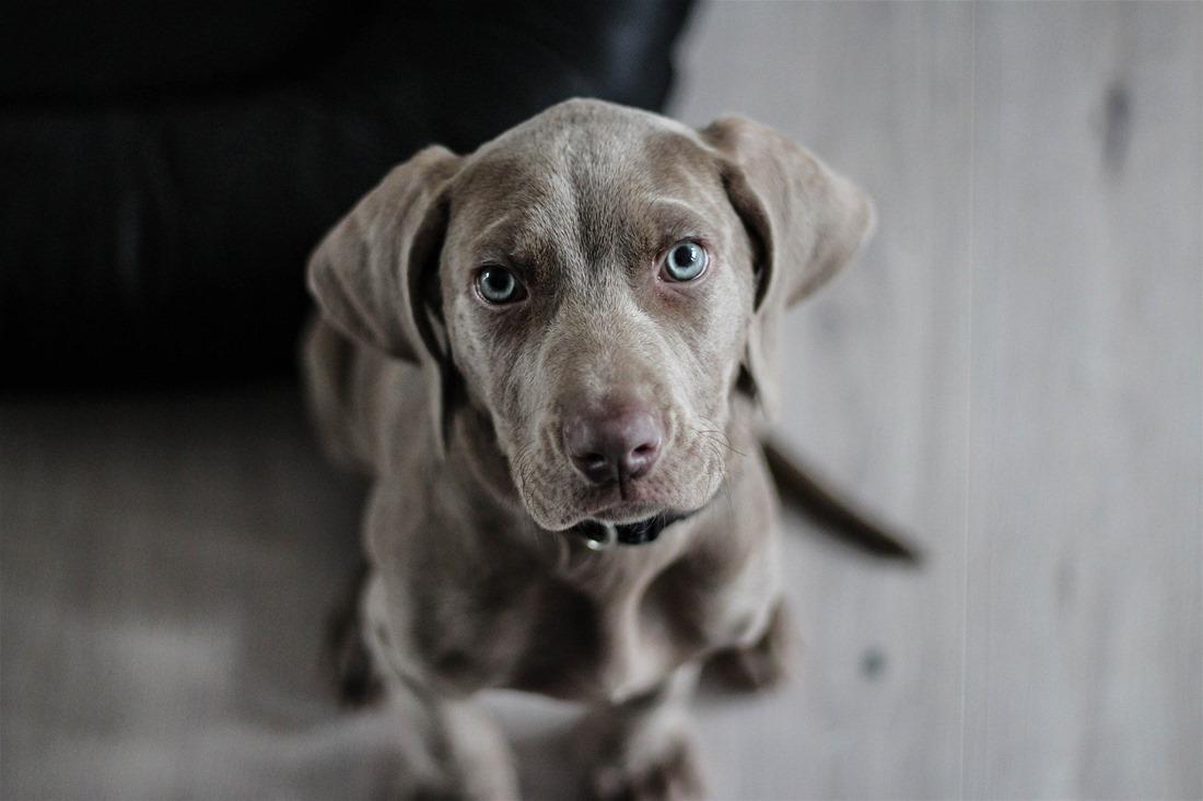 Σκύλος: Tips για να μάθει να μένει μόνος του στο σπίτι