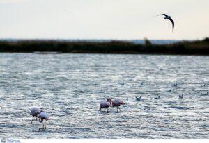 IUCN: Η κλιματική αλλαγή οδηγεί το 30% των ειδών σε εξαφάνιση