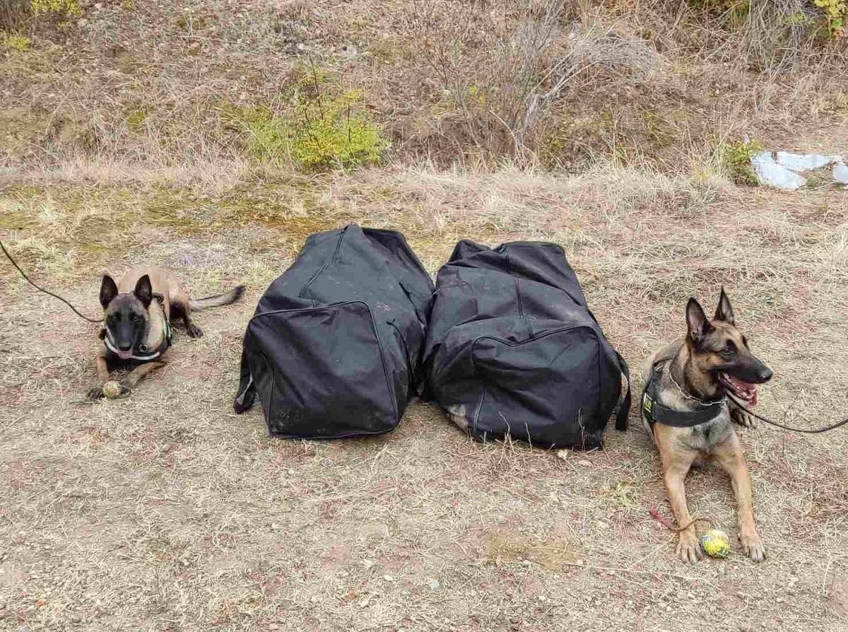 Κιλκίς: Βρήκαν 21 κιλά κάνναβης τα λαγωνικά της Αστυνομίας (ΦΩΤΟ+VIDEO)