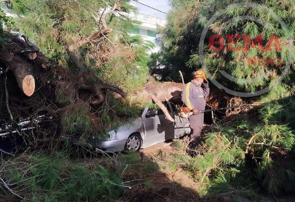 """Αγιά Τριάδα: Ο """"Μπάλλος"""" έφερε πτώσεις δέντρων στην περιοχή (ΦΩΤΟ)"""