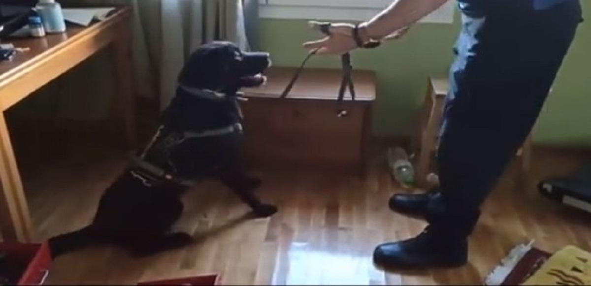 Σέρρες: Ο «Άτλας» εντόπισε ναρκωτικά σε δύο σπίτια διακινητών (ΦΩΤΟ+VIDEO)