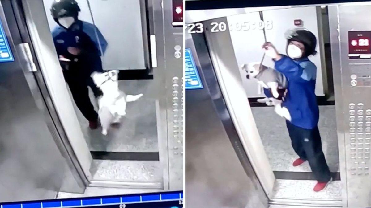 Ντελιβεράς σώζει κουταβάκι από σίγουρο πνιγμό σε ασανσέρ (VIDEO)