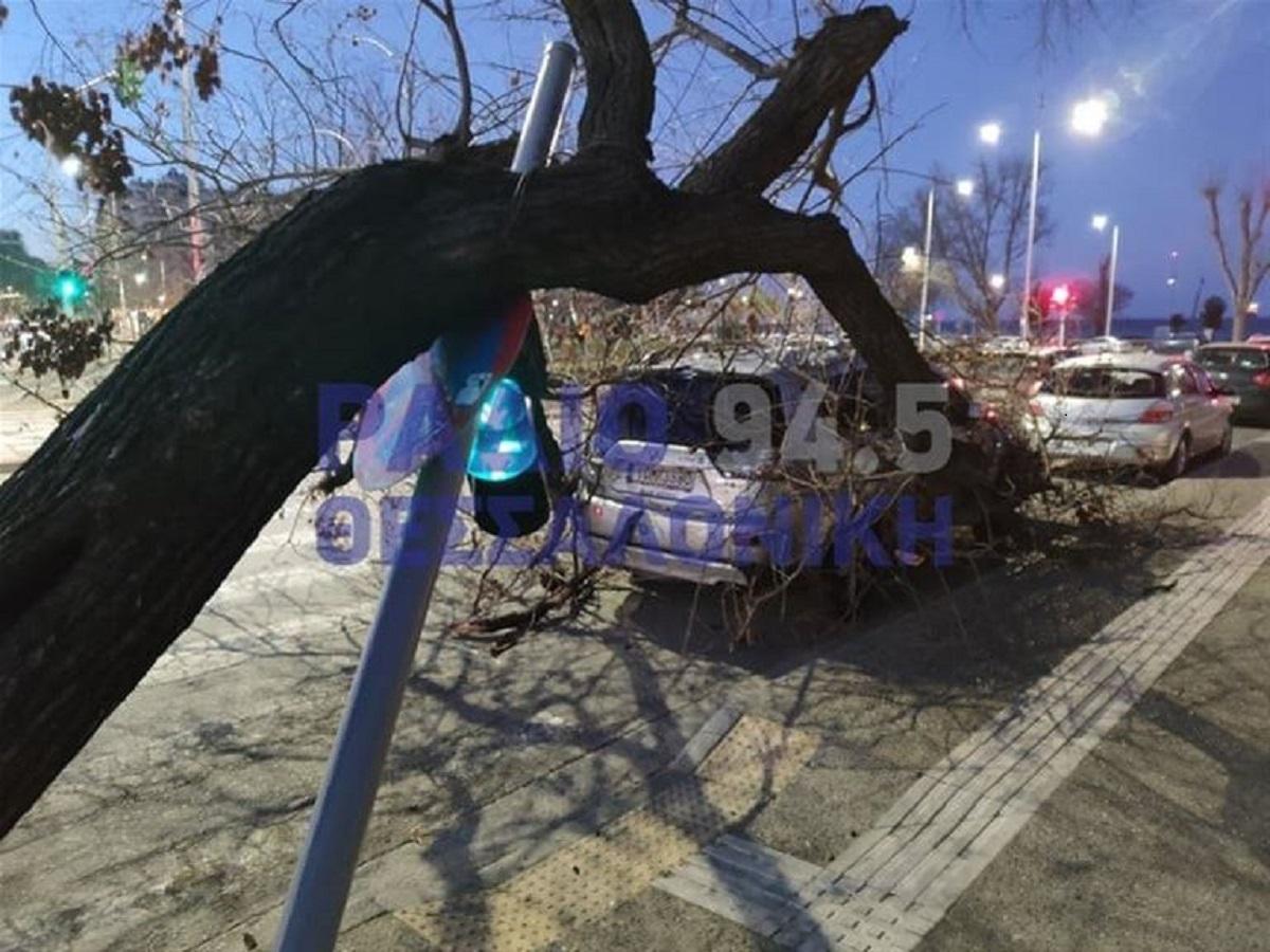 Πτώσεις δέντρων τα ξημερώματα στη Θεσσαλονίκη – Ζημιές σε οχήματα (VIDEO)