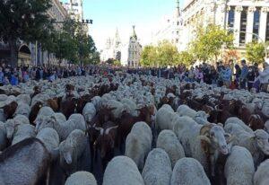 Ισπανία: Πρόβατα κατέκλυσαν κεντρικούς δρόμους της Μαδρίτης (ΦΩΤΟ)