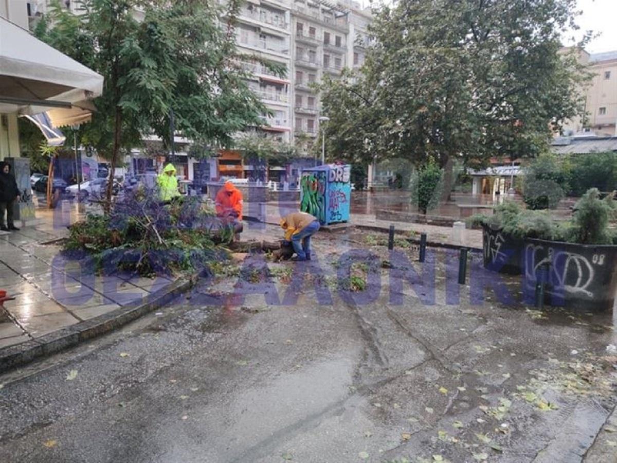 Πτώση δέντρου από την κακοκαιρία στο κέντρο της Θεσσαλονίκης (VIDEO)