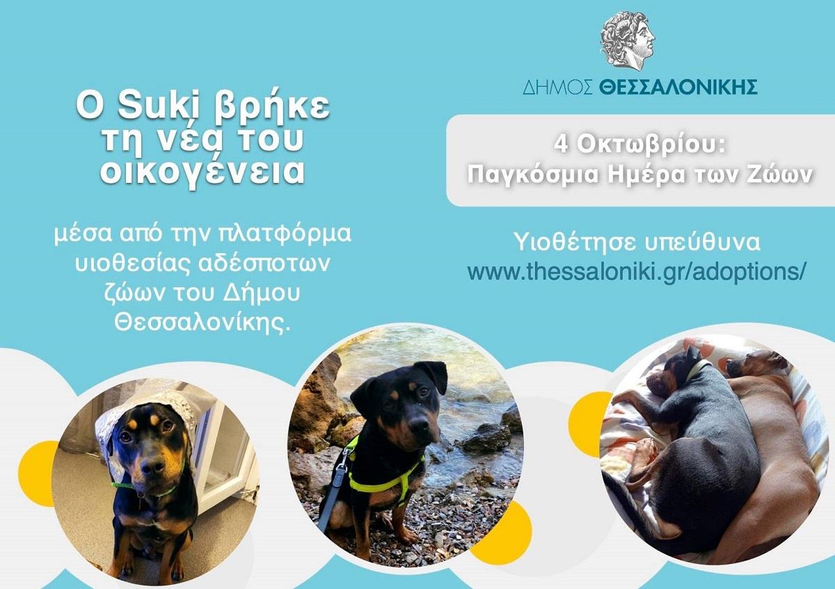 Ο Δήμαρχος Θεσσαλονίκης, Κωνσταντίνος Ζέρβας, μας συστήνει τον Suki (ΦΩΤΟ)